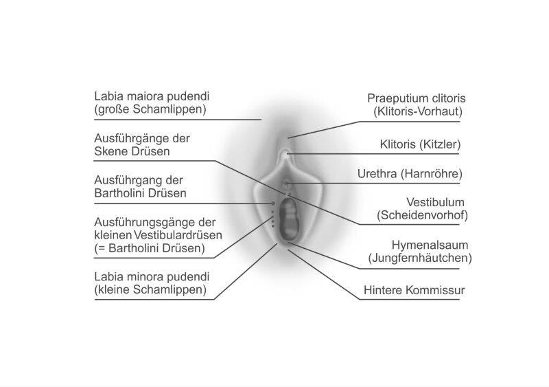 Weiblichen Zeichnung Kitzlers des Zeichnung